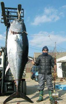 松方弘樹が釣ったマグロ